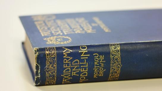 angelika-books-helen